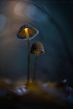 The ocean and the mushrooms rely on the power of the moon. We should always find appreciation for the brightest light beaming proudly in the darkest skies.   #moon #mushrooms #sky  (c) Martin Pfister