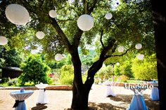 paper lanterns in oak tree and hanging in reception area