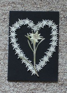 Real Pressed Edelweiss Greetings/Note Card by AlexV on Etsy, $10.00
