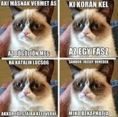 "Képtalálat a következőre: ""grumpy cat magyarul felirattal"" Grumpy Cat Quotes, Funny Grumpy Cat Memes, Funny Cats, Cat Qoutes, Funny Memes, Hilarious, Animal Jokes, Funny Animal Memes, Funny Animals"