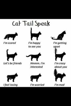 Car tail speak