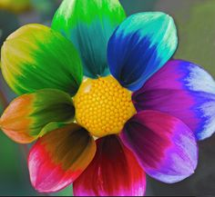 paint flower with different colors. Rainbow Magic, Rainbow Art, Rainbow Colors, Rainbow Things, Exotic Flowers, Beautiful Flowers, All The Colors, Different Colors, True Colors