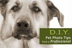 10 DIY Pet Photography Tips from a Professional