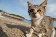 """50 fotos incre�bles de """"la isla cielo de los gatos"""" en Jap�n"""