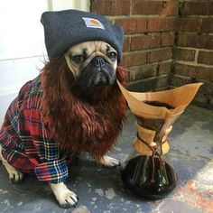 Funny Dogs but only Pug Videos Funny Animal Photos, Animal Memes, Animal Pictures, Funny Animals, Cute Animals, Funny Pictures, National Pug Day, Pugs In Costume, Pet Costumes
