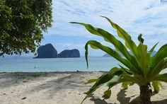 Скачать обои тайланд, пальмы, море, пляж, тропики, раздел пейзажи в разрешении 1680x1050
