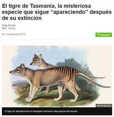 """""""El tigre de Tasmania, la misteriosa especie que sigue """"apareciendo"""" después de su extinción"""" [BBC Mundo]"""