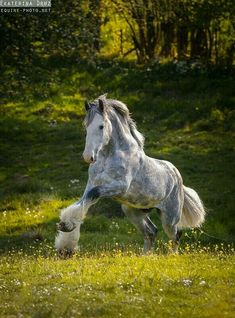 Draft Horses - Equine Photography by Ekaterina Druz All The Pretty Horses, Beautiful Horses, Animals Beautiful, Cute Animals, Beautiful Gorgeous, Big Horses, Work Horses, Horse Love, Black Horses