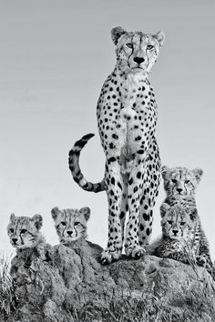 plasmatics-life:  Family portrait from Africa ~ By Arun Mohanraj