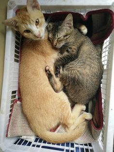 lovely mom and baby; Mom Picatty and baby Catty