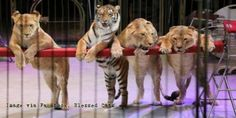 """It might be better to show them to a vet, not circus visitors."" (75107 signatures on petition)"