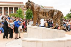 The University of Memphis mascot, TOM the tiger right after the unveiling, spring 2012.