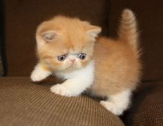 """""""There's no more intrepid explorer than a kitten."""" --Agnes Repplier"""