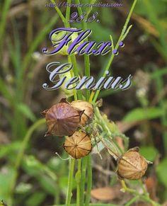 Genius is one percent inspiration and ninety-nine percent perspiration. — Thomas Alva Edison — #FlorasDial #Floriology #Flower #Meaning #Flax #Genius #FlorasDial0828