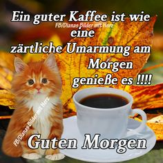 jpg & # from WienerWalzer. One of 1014 files in the category & # good-morning-pictures & # on FUNPOT. Over The Top, Good Vibe, Montage Photo, Healthy People 2020 Goals, Morning Pictures, Dog Snacks, Nutrition, Easy, Good Morning