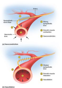 The ANS can produce opposite effects on an organ without the use of dual innervation. For example, the sympathetic fibers to blood vessels have a baseline sympathetic tone that keeps the vessels in partial constriction called vasomotor tone. An increase in firing constricts the vessel, while a decrease dilates it, therefore, letting the sympathetic division exert different effects on the vessels. The vasomotor tone acts to shift blood flow from one organ to the next based on the body's need.