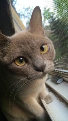 kovkovkovkov:  I honestly just took the greatest picture of my cat wtf      http://mel-cat.tumblr.com/