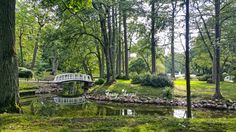 Download this photo of #green #park #bridge for free and use it for your #blog, social network or commercial purpose. ----> http://festyy.com/qFY7M6