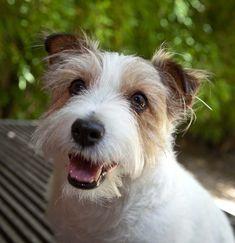 Melbourne Pet Photography| Pupparazzi.com.au