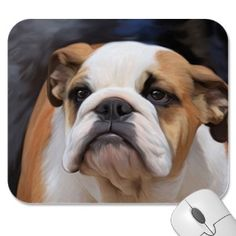 #englishbulldog #dogs
