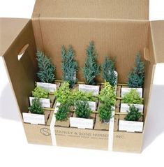 A miniature conifer is any conifer that grows less than 1 inch in a single year.