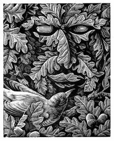 Andrew Davidson, birdface