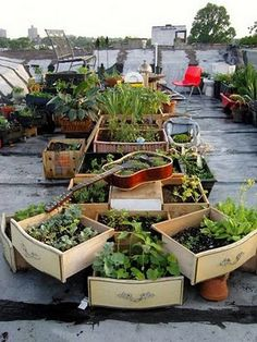 A raised garden from old dresser drawers. Why build when you can up-cycle?