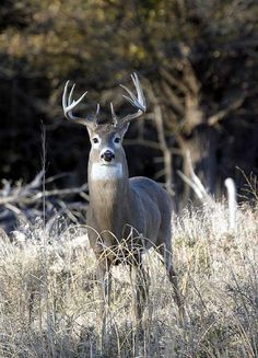 Whitetail Deer: How to Pattern Bucks During the Rut | Outdoor Life--by Mark Kenyon