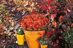 www.rustica.fr - Fleurir les abords de la maison en automne  Voici 8 idées pour composer un décor bien fleuri tout l'automne… et parfois plus !