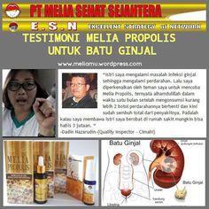 Khasiat Melia Propolis Untuk Batu Ginjal