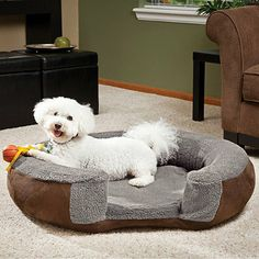 Joey was once an ARF dog and is now a model :)  Coleman® AeroBed® Pet Air Bed - BedBathandBeyond.com