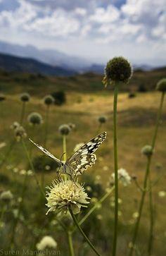 Hidden life of insects by Suren Manvelyan, via Behance