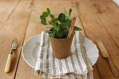 veggie starts in a pot: what a great wedding favour idea for a springtime island wedding!