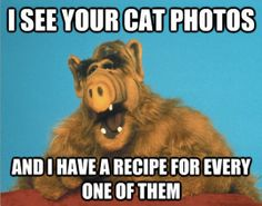 I see your cat photos…