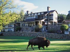 Custer State Park, South Dakota At the State Game Lodge in the Black Hills of South Dakota, it's just you, 71,000 acres of nature…and 1,300 free-roaming bison. If you want to improve your chances, Buffalo Safari Jeep Tours leave every day from the lodge. And because the hotel sits within Custer State Park, a premier wildlife sanctuary, bison aren't all you'll see.