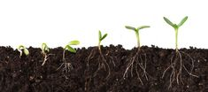 Microbiome: Soil science comes to life : Nature : Nature Publishing Group