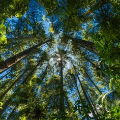 Every now and then I am reminded to just look up, and this is the awesomeness I discovered one day while walking in the great outdoors... Purchase a print, cards, or a full size digital file of this image at www.kirkvogel.com