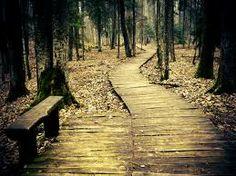 forest path - Pesquisa do Google