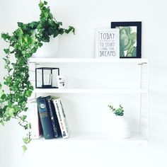 White and bright clean shelving unit with plants