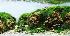 Вчера пришли результаты #IIAC2016. Rank153. #aquaproject #aquascape
