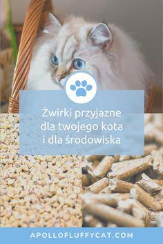 Ekologiczne żwirki zagoszczą w naszym domu na dobre. Poznaj moje recenzje, efekty testów i dowiedz się, które żwirki dla kotów są według nas najlepsze i najbardziej ekologiczne! Fluffy Cat, Apollo, Lifestyle, Cats, Blog, Gatos, Blogging, Cat, Kitty