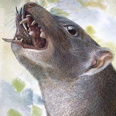 Mirabilis Malleodectes (mamífero marsupial del Mioceno de Australia, 15Ma) (Peter Schouten)