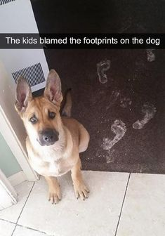 animal captions 25 of the Best Good Doggo Snaps We Could Find - World's largest collection of cat memes and other animals Funny Animal Memes, Dog Memes, Funny Dogs, Cute Dogs, Funny Animals, Cute Animals, Funny Memes, Fun Funny, Funny Dog Pictures