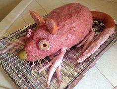 [Found] A lovely rat loaf