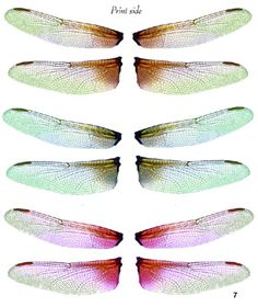 OOAK Artist Emporium - Fairy Wing Prints