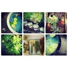 kasi-fiendlyと植物たち