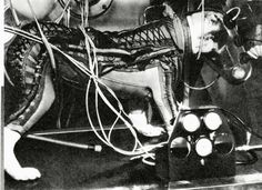 """NMMSH  Laika, the first canine launched into space, is shown training in her space suit, in the Soviet publication """"Animals: Pioneers of Outer"""