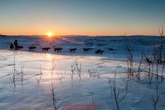 Jeff King runs past an overflow glacier at sunrise as he leaves the Koyuk checkpoint on Monday March 14th during the 2016 Iditarod.  Alaska    Photo by Jeff Schultz (C) 2016  ALL RIGHTS RESERVED: Jeff King runs past an overflow glacier at sunrise as he leaves the Koyuk checkpoint on Monday March 14th during the 2016 Iditarod.  Alaska    Photo by Jeff Schultz (C) 2016  ALL RIGHTS RESERVED