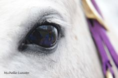 Look into the horse's eye and you will see its owner. (2013)
