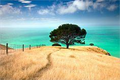 New Zealand @Lisa